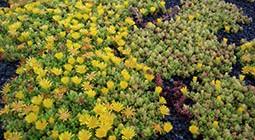 NCSU rain garden plants