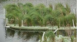 Pond Improvements